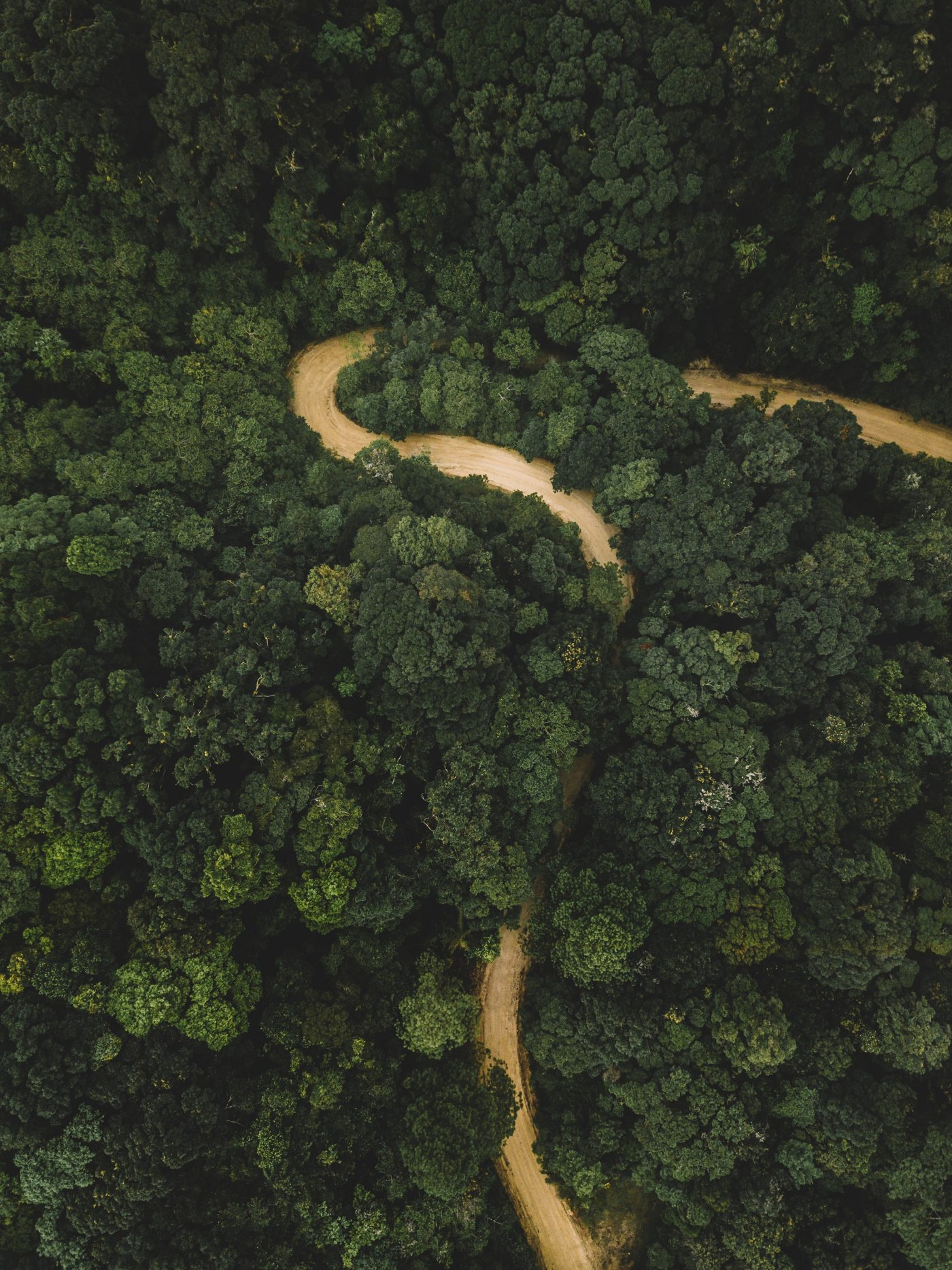 Picture of Honduras Forest scape from above with a winding dirt road